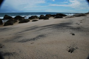 Deer Tracks on the beach